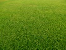 Golfgrünvertretung Stockfoto