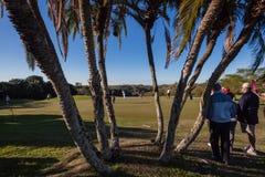 Golfhibiskusen seglar utmed kusten Selborne Royaltyfria Bilder