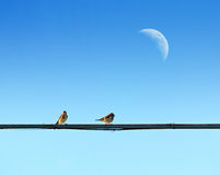 Golfinches and moon Stock Photo