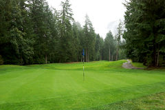 Golfing Golf Course. A golf course green and fairway lined with large trees in British Columbia Stock Image