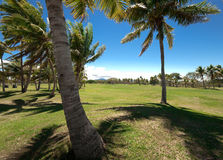 Golfing in Paradise. WS: Golf tee amongst the coconut palms by the sea under a blue sky Royalty Free Stock Photography
