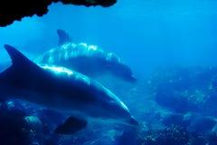 Golfinho 2 Foto de Stock