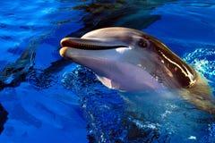 Golfinho Fotografia de Stock