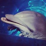 golfinho Imagens de Stock