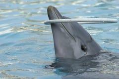 Golfinho Fotos de Stock Royalty Free