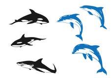 Golfinho & tubarão ilustração royalty free