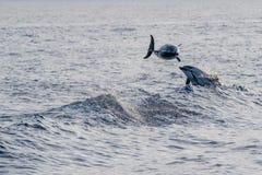 Golfinho ao saltar no mar azul profundo foto de stock royalty free