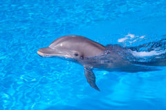 Golfinho bonito na água Foto de Stock Royalty Free