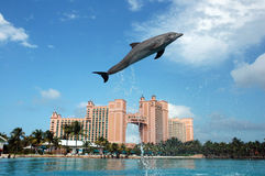 Golfinho Cay Experience de Atlantis foto de stock royalty free