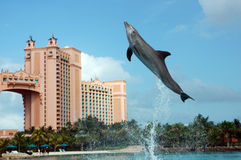 Golfinho Cay Experience de Atlantis foto de stock