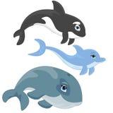 Golfinho da família de peixes do oceano, baleia e baleia de assassino Foto de Stock Royalty Free
