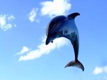Golfinho de salto Fotografia de Stock