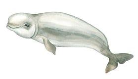 Golfinho do branco da aquarela Foto de Stock