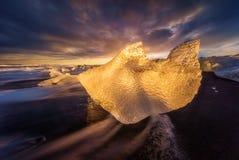 Golfinho do gelo Imagens de Stock
