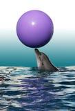 Golfinho e bola Foto de Stock
