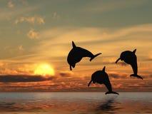 Golfinho e por do sol Fotografia de Stock Royalty Free
