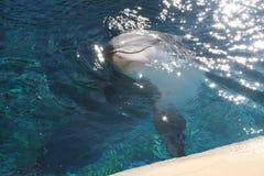 Golfinho feliz Imagens de Stock