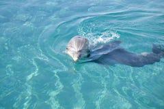 golfinho Frasco-cheirado fotografia de stock royalty free