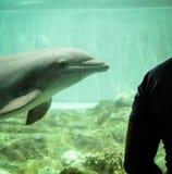 Golfinho no aquário imagens de stock