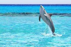 Golfinho no mar do Cararibe fotografia de stock