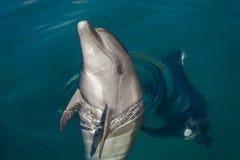 Golfinho que joga no mar Fotografia de Stock