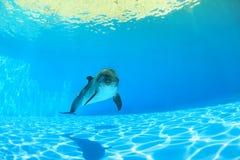 Golfinho sob a água fotografia de stock royalty free