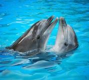 Golfinhos imagem de stock royalty free