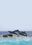 Golfinhos do voo Foto de Stock Royalty Free