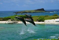 Golfinhos em voo fotografia de stock