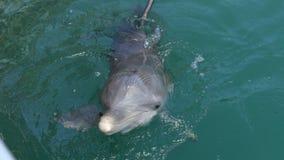 Golfinhos felizes que jogam a água azul filme