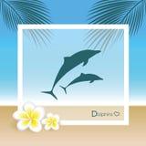 Golfinhos na praia com folhas de palmeira e flores do frangipani ilustração do vetor