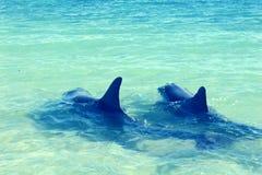 Golfinhos no macaco Mia foto de stock royalty free