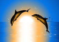 Golfinhos no por do sol Fotos de Stock Royalty Free