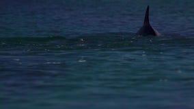 Golfinhos que jogam debaixo d'água filme