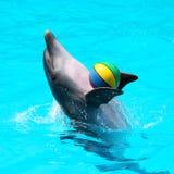 Golfinhos que jogam na água azul com bolas Fotografia de Stock Royalty Free