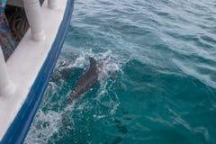 Golfinhos que nadam perto de um barco - Fernando de Noronha, Pernambuco, Brasil Imagens de Stock Royalty Free