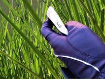 Golfklubb med gräsbakgrund fotografering för bildbyråer