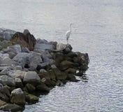 Golfkusten Stock Afbeeldingen