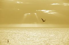 Golfo del Messico dorato Immagini Stock Libere da Diritti