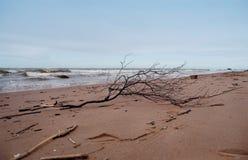 Golfo della Finlandia fotografie stock libere da diritti