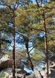Golfo di Larchant nella foresta del massiccio di Fontainebleau Fotografia Stock Libera da Diritti