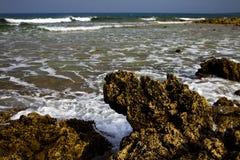 Golfo Lanzarote d'EL de pondin de musc de l'Espagne photos libres de droits