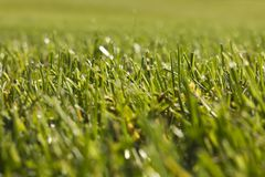 Golfplatz in Belek Grünes Gras auf dem Feld Stockfotos
