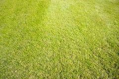 Golfplatz in Belek Grünes Gras auf dem Feld Stockfoto