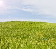 Golfplatz in Belek Grünes Gras auf dem Feld Blauer Himmel, sonnig Stockfotografie