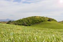 Golfplatz in Belek Grünes Gras auf dem Feld Blauer Himmel, sonnig Stockbilder
