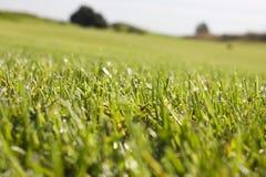 Golfplatz in Belek Grünes Gras auf dem Feld Blauer Himmel, sonnig Lizenzfreies Stockbild