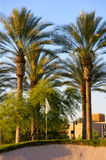 Golfplatz in der Arizona-Wüste Lizenzfreies Stockbild
