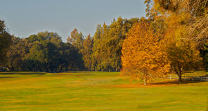 Golfplatz grünt zwei Goldblattbäume Lizenzfreie Stockbilder