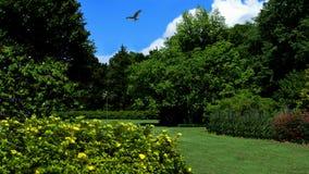 Golfplatz u. Falke Stockfotografie